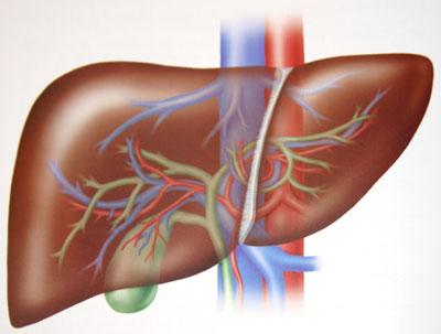 Кожные проявления гепатита с у ребенка