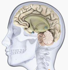 Лечение кисты эпифиза головного мозга в Израиле
