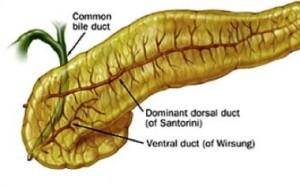 Лечение эхинококкоза поджелудочной железы в Израиле