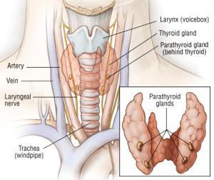 Лечение фолликулярной кисты щитовидной железы в Израиле