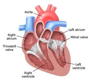 Лечение тератомы сердца в Израиле