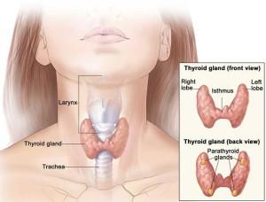 Операции на щитовидной железе в Израиле