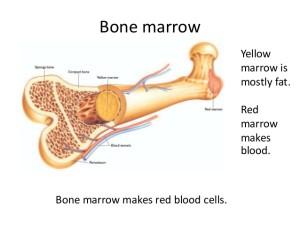 Лечение опухоли костного мозга в Израиле
