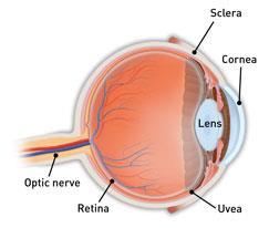 Лечение опухоли глаза в Израиле
