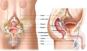 Лечение опухоли полового члена в Израиле